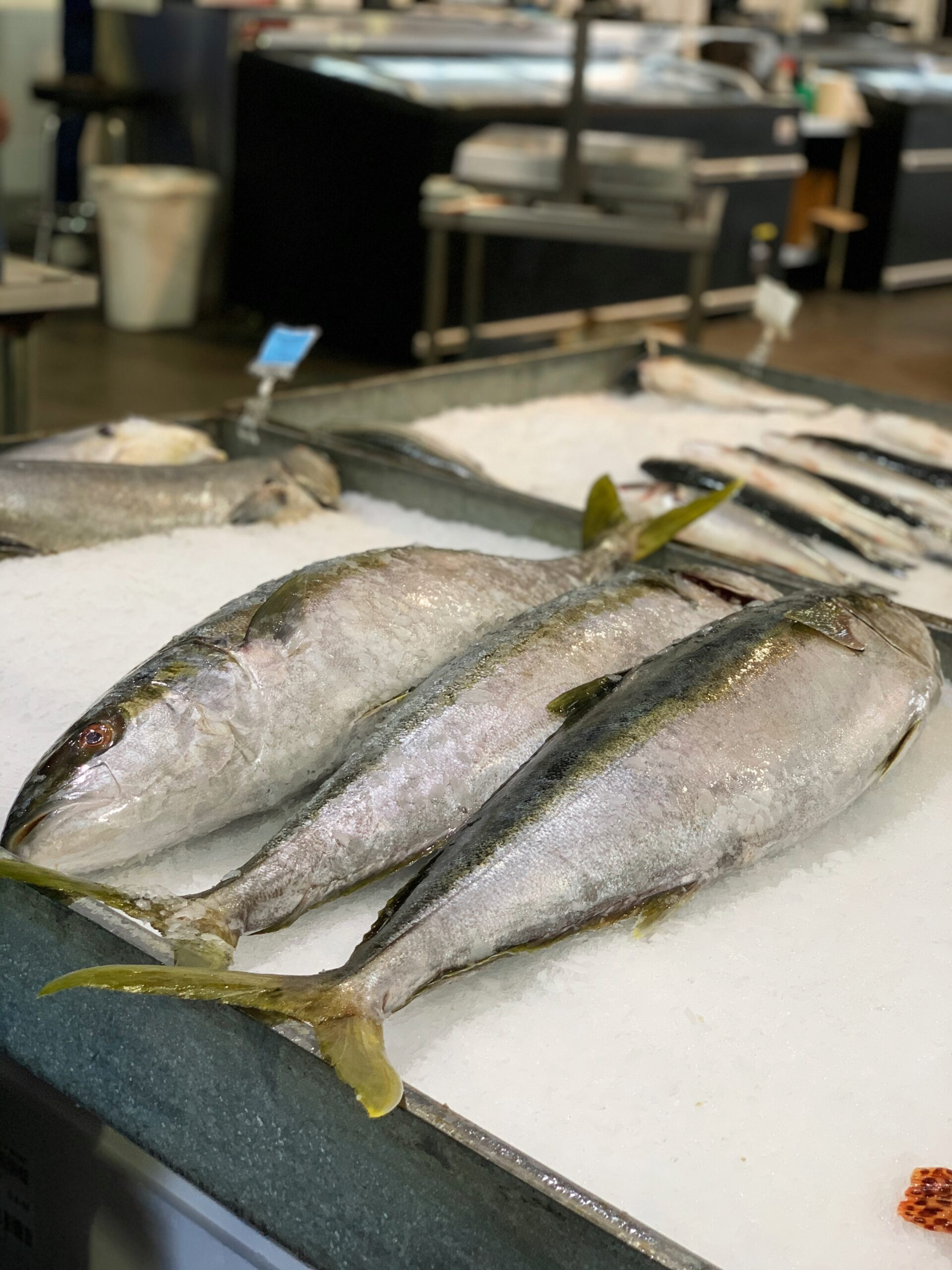 Mexican Yellowtail